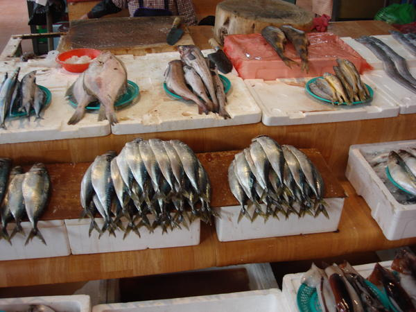 Fish, More Fish